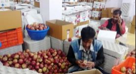 Farmer-unions-in-Himachal-Pradesh-to-protest-today-against-falling-apple-prices- Best Article